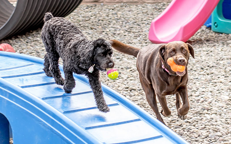 Dog Daycare at LaDeDa pet spa