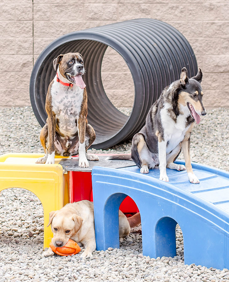 Dog Daycare Outdoor Play at LaDeDa pet spa